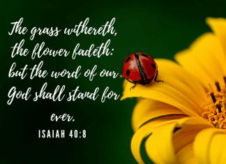 Isaiah 40:8 - Ladybug