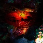 electric clam by abdul 3