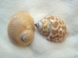two little shells