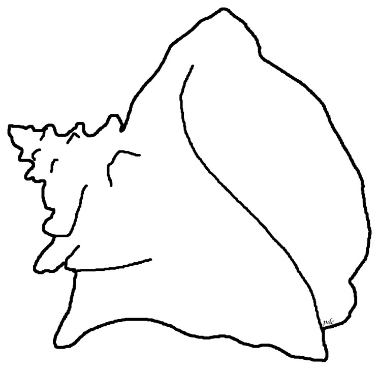 queen conch pink coloring page download