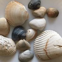 Seashell Markings and Bore Holes