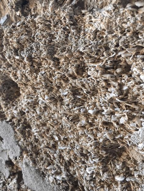 coquina rock wall