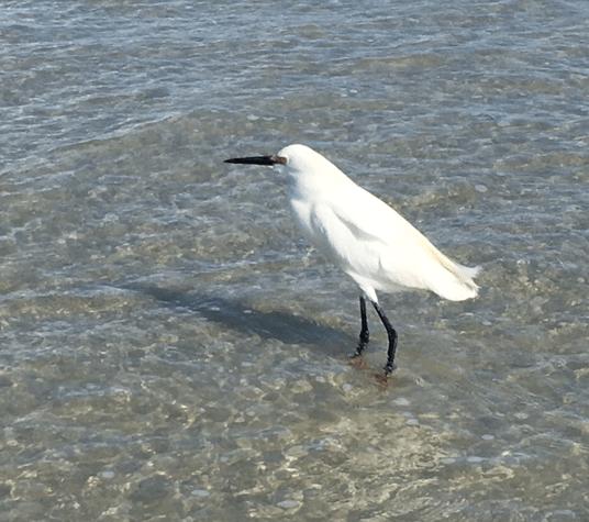 unknown white bird