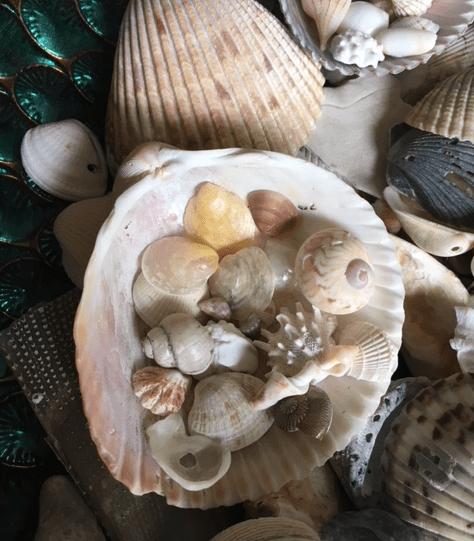 Giant cockle shell holder for smaller shells