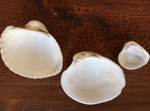 underneath white seashells