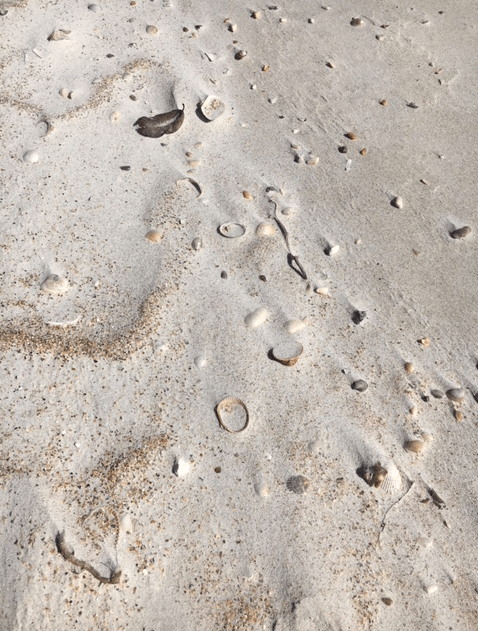 shells in the sand