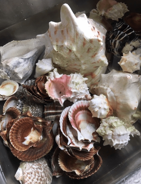 Washing the seashells in the sink