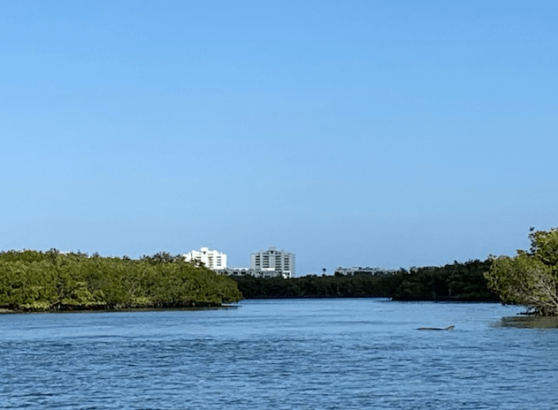 Dolphin and condos in the distance