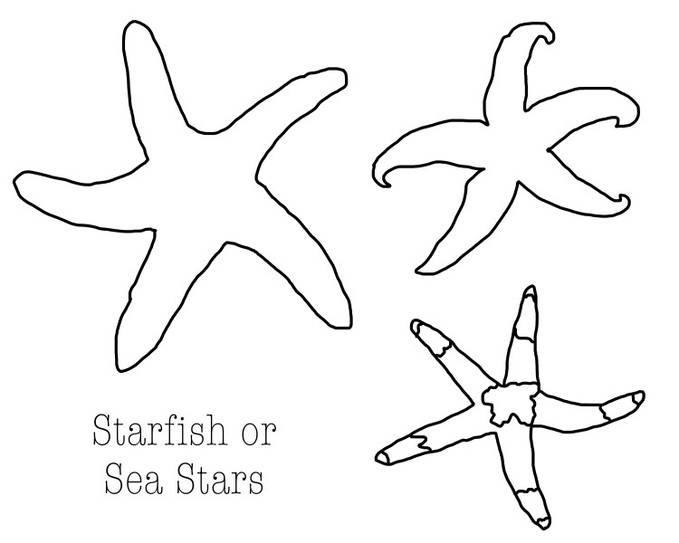starfish coloring page download