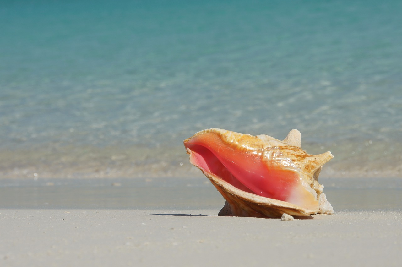 pink conch in beach sand