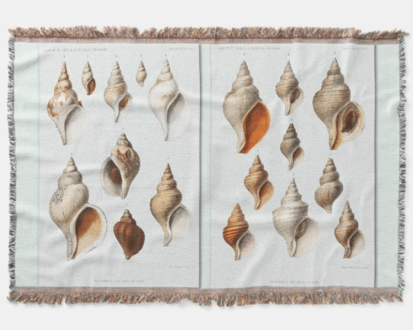 vintage conch shells blanket artistic beach shells drawings illustrated whelks