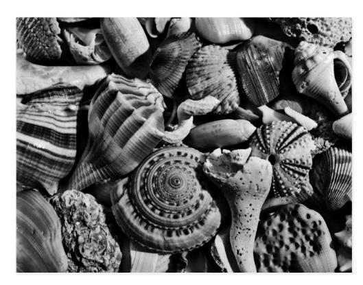 Black and white seashell photography postcard