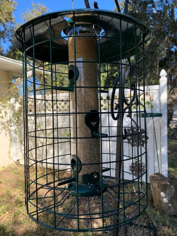 Caged tube feeder keeps birds safe