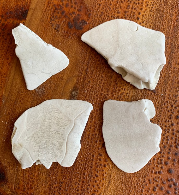 White pieces of sand dollars