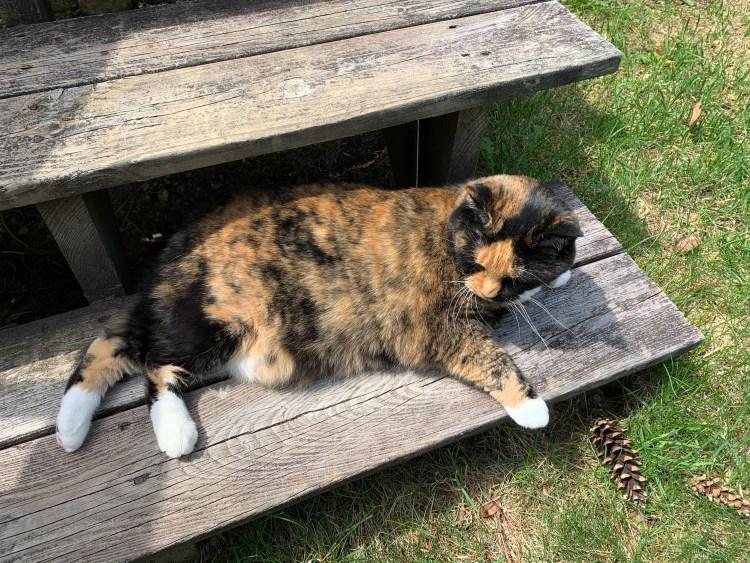 cat in sun on steps