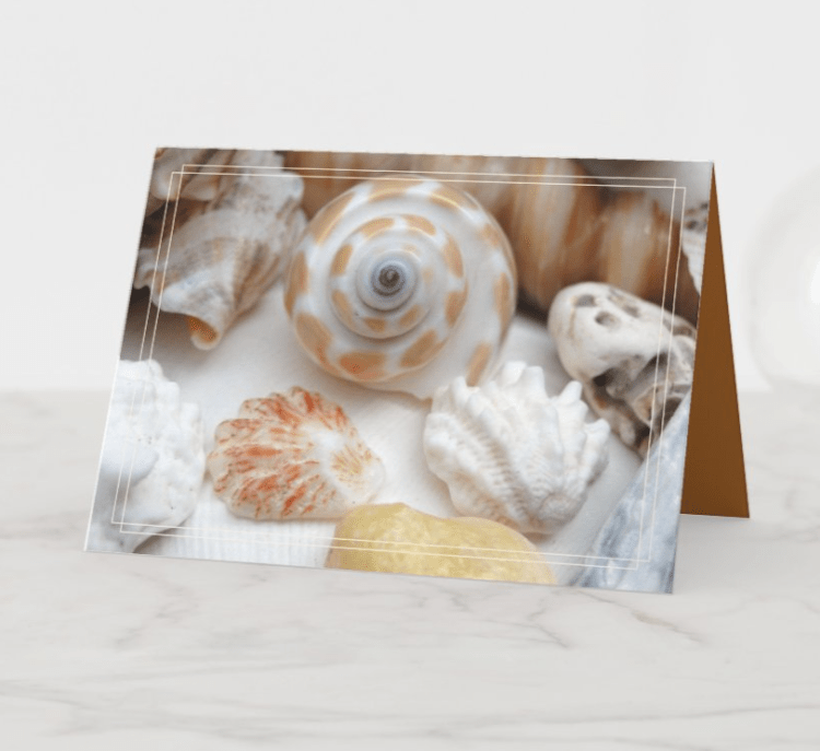 Natica, kitten's paw and jewel box seashells folded note card