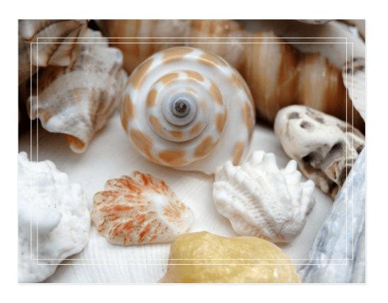 seashells postcard beach shells photography