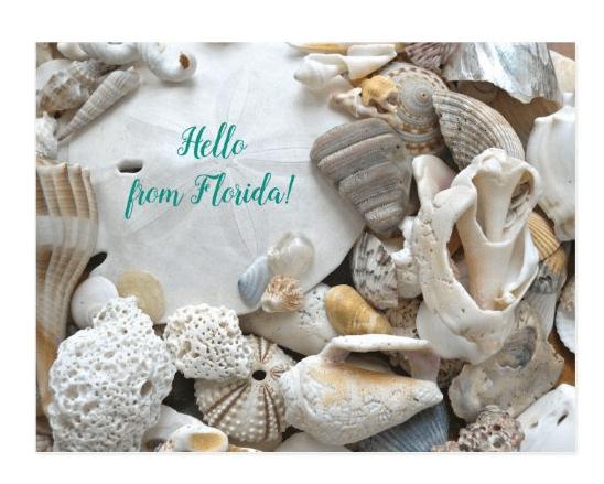 hello Florida postcard seashells sand dollar photography beach shells