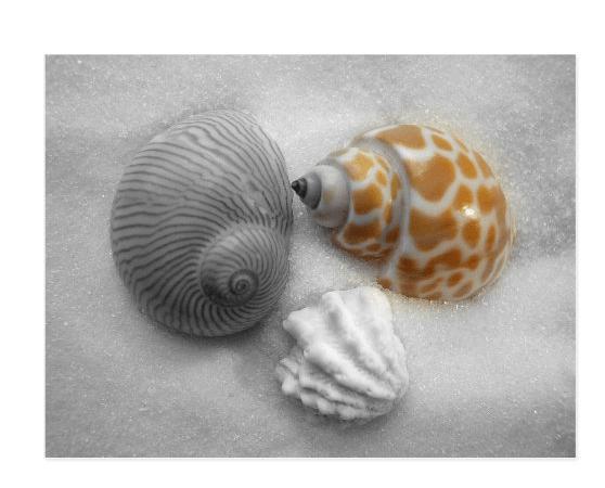 Seashells postcard partial black and white
