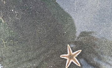 sea star, starfish , tiny sea star, sea life, echinoderm
