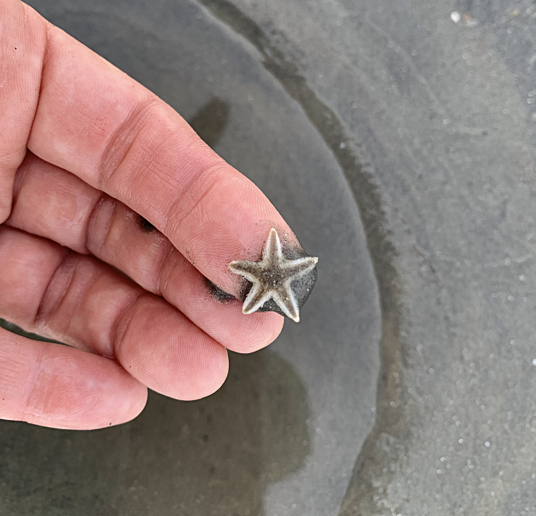 sea star, starfish, sea life, Florida, beach-combing