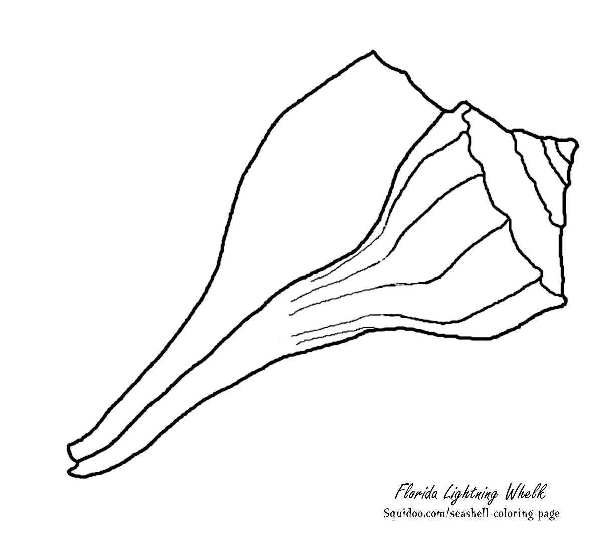 Free Seashell Coloring Pages Update Seashells By Millhill