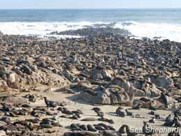 editorial_120604_1_2_Seals_at_Cape_Cross_Seal_Reserve-1
