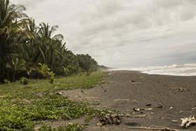 news-150626-1-sea-turtle-nesting-grounds-on-pacuare-beach-costa-rica-826-280w.jpg