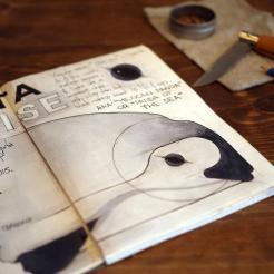 news-171212-1-1b-Illustration-Vaquita-sketching-1