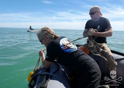 Les Stroud helps free whale. Photo: Logan Kanan