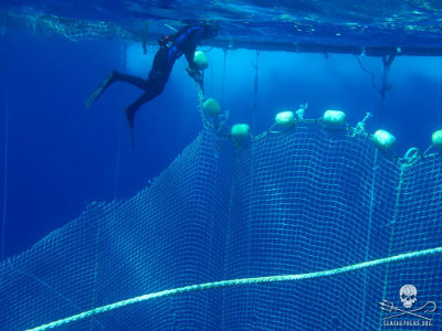 editorial-150304-1-100617-libyan-waters-diver-tuna-net-008-sa3353-400w