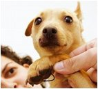 reward_small_dog_with_hook_in_foot