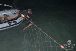 Farley Mowat's bosun Adam Conniss removing a dead totoaba bass from an illegal totoaba net in the vaquita habitat. Photo: Carolina A Castro