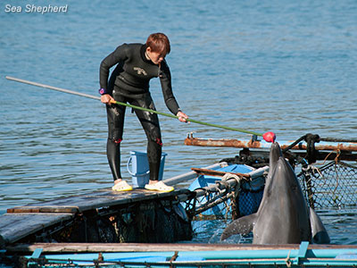 editorial-121205-1-2-bottlenose-and-trainer
