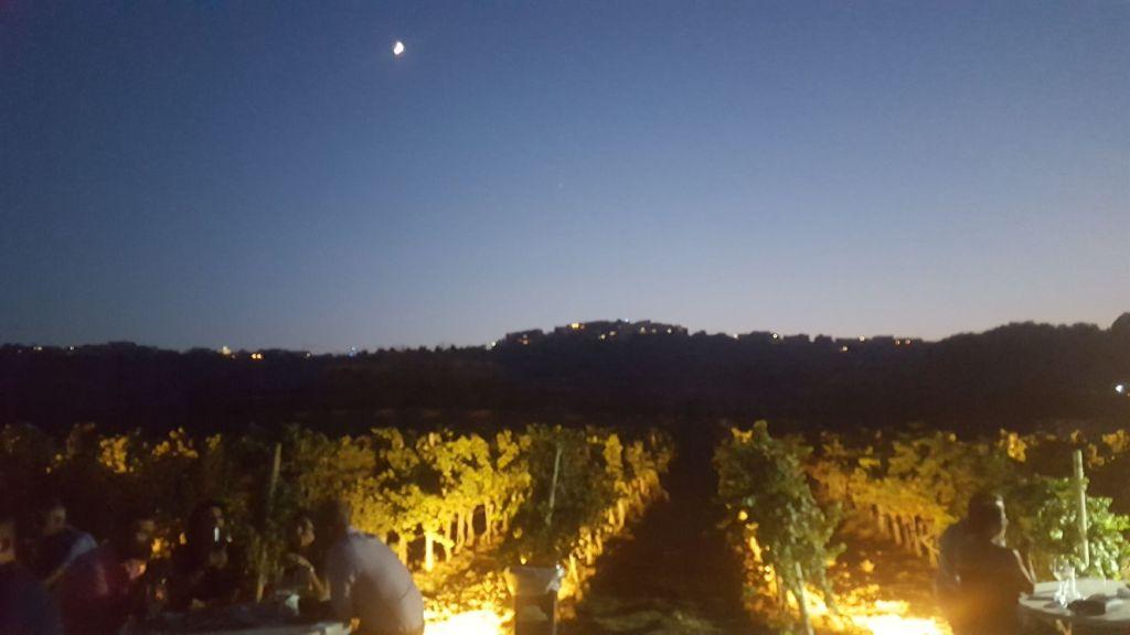 Wine Tasting Malta at Marsovin's Wine Estate in Gozo
