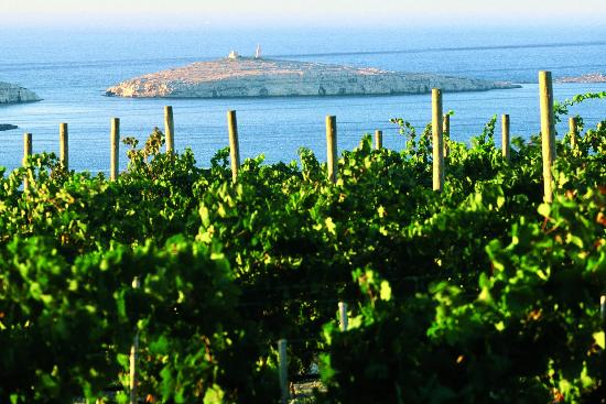 Wine Tasting Malta - Cheval Franc Estate St Pauls Bay