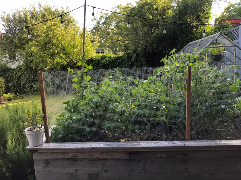 DIY Garden Fence for under $30