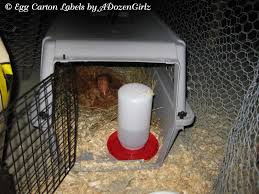 chick cat carrier isolation