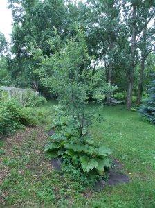 rhubarb.appletrees