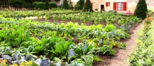 sf row garden better
