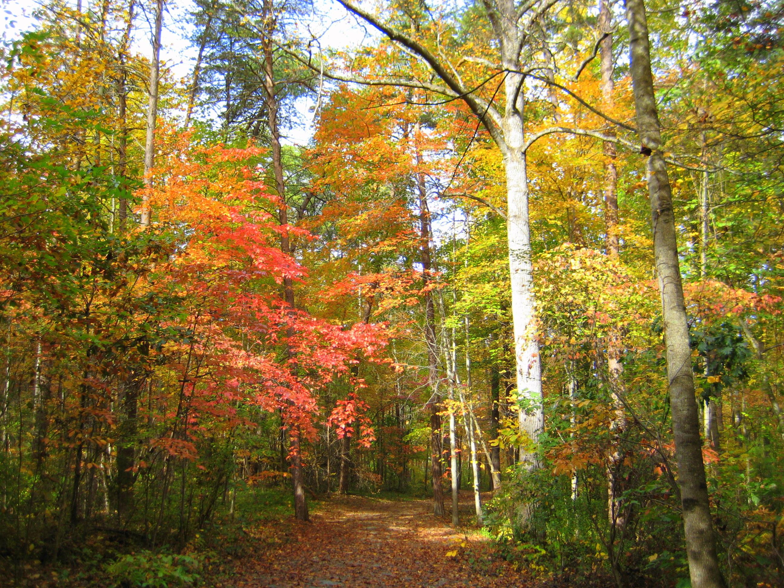 Trail near our house - Bethabara Park