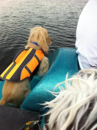 Dog Swimming shamrock
