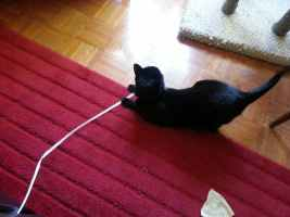 The best cat toy ever — and it's free