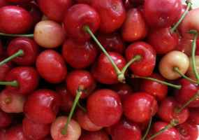 Fermentation Friday: How to make cherry wine