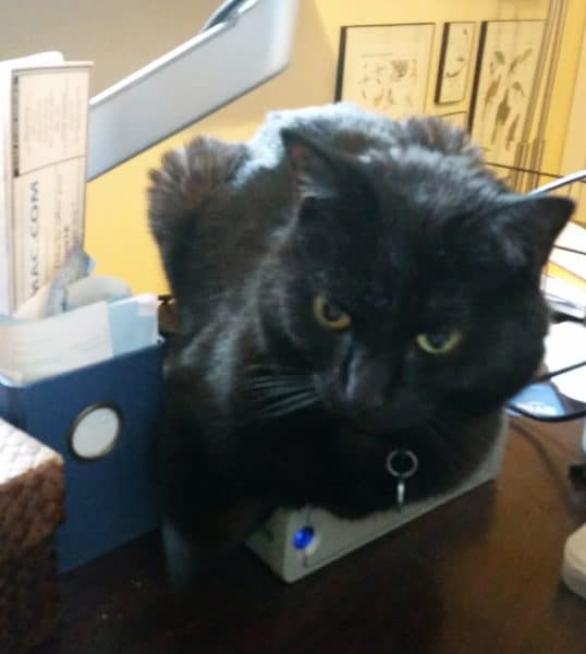 cat sitting on old computer backup drive
