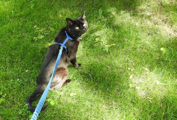 Lilo on a leash, sitting in the grass