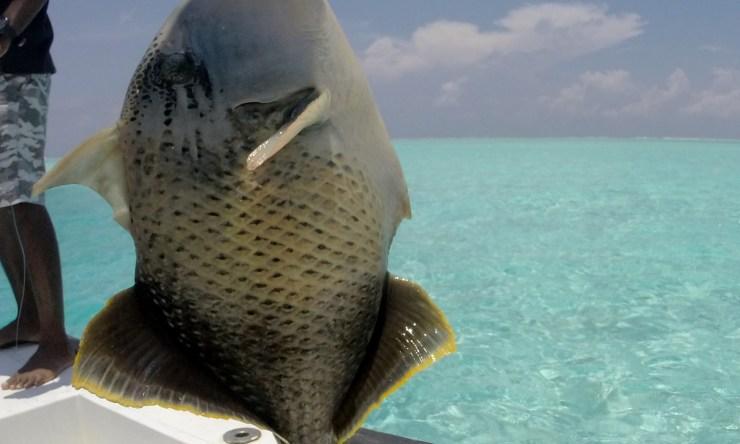 Fishing 06