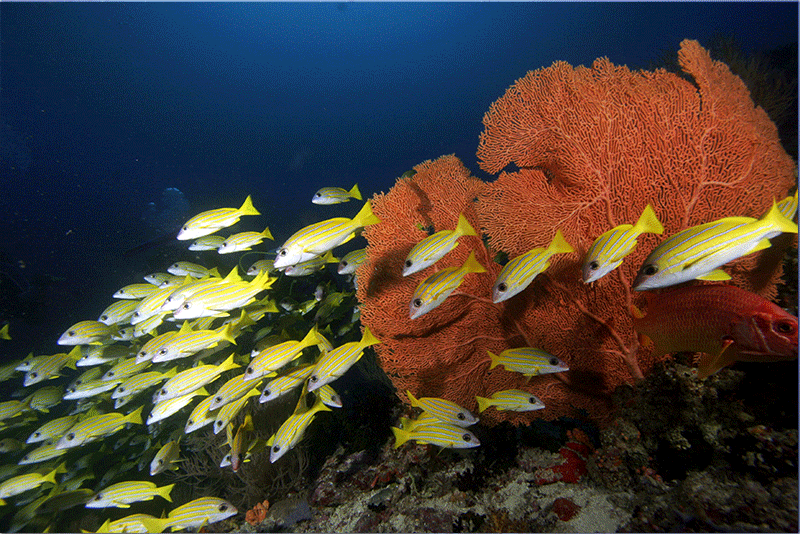 Diving-10WEB