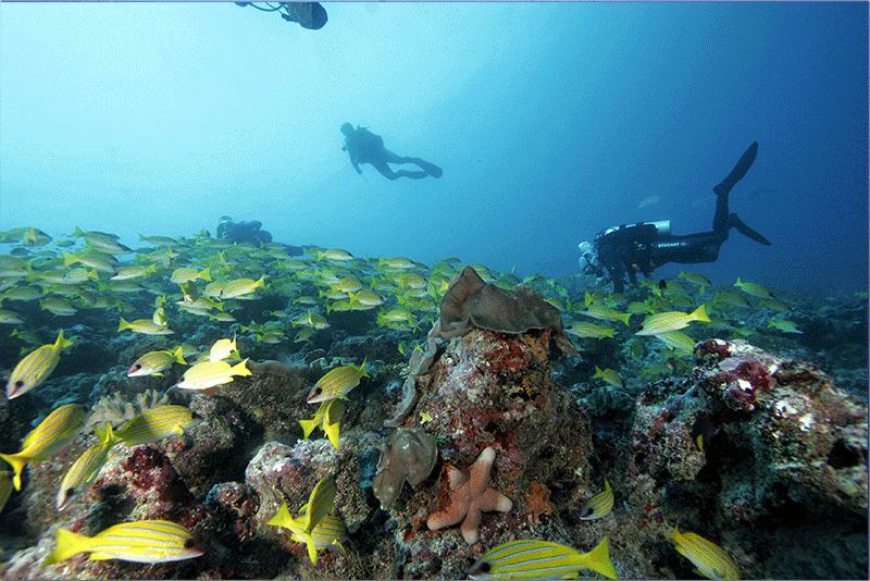 Diving-15WEB