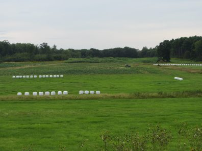 Marshmallows in the field on North Pond Road in Warren, Maine
